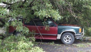 Cae árbol sobre camioneta en Azcapotzalco