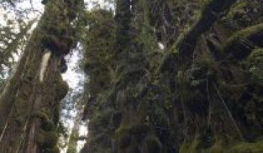 Día Internacional de los Parques Nacionales: por qué Chile debe contar con un Servicio de Biodiversidad y Áreas Protegidas