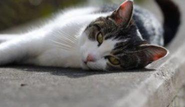 Elwood, el pequeño gato que se convirtió en guardia de seguridad en Canadá