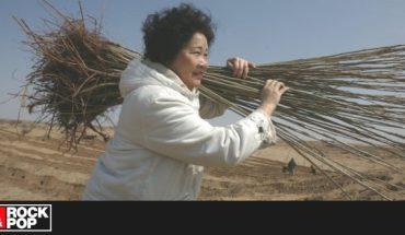 Mujer plantó dos millones de árboles para cumplir deseo de su difunto hijo