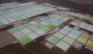 Presidenta de Tianqi Lithium deja la compañía en momentos difíciles para el productor de litio