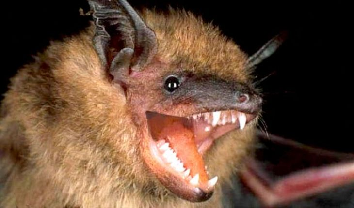 SARS-CoV-2 lleva décadas en murciélagos, era cuestión de tiempo para que pasara a los humanos