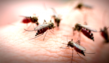 750 million genetically modified mosquitoes to be released in Florida