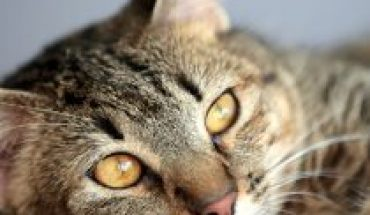 Cat Month: Care for Responsible Tenure
