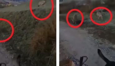 Man and His Dog Are Stalked by Two Hungry Wolves (VIDEO)