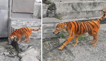Acusan de maltrato animal a personas que pintaron un perrito como tigre