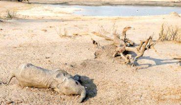Aumenta a 22 el número de elefantes muertos en Zimbabue