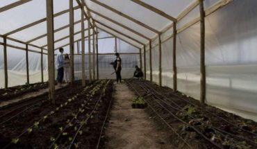 Aumenta la demanda para habilitar huertos de emergencia para apoyar las ollas comunes