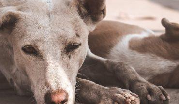 Diputada de Morena propone hasta 5 años de prisión por maltrato animal en México