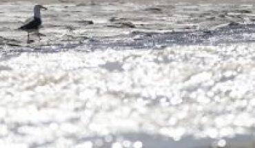Más de 15 años esperando: organizaciones ciudadanas exigen tramitar las normas para la protección de las aguas del Río Aconcagua
