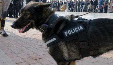 Perro policía rescató a una menor de 15 años que estaba siendo violada por un secuestrador