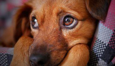 [VIDEO] Revisa las recomendaciones para cuidar a tus mascotas durante Fiestas Patrias