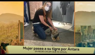 Mujer se vuelve viral por pasear a un tigre   La Bola del 6