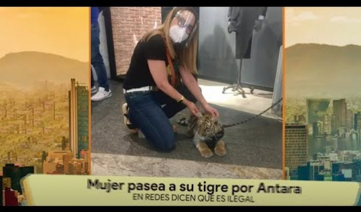 Mujer se vuelve viral por pasear a un tigre | La Bola del 6