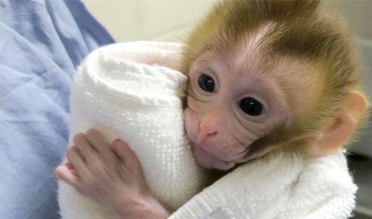 Warn of U.S. monkey shortage following high demand for covid-19 clinical trials