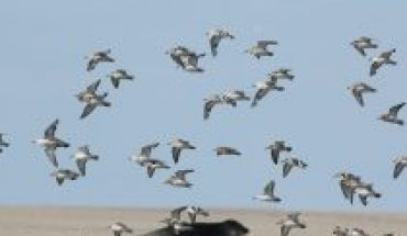 World Beach Bird Day: the importance of its conservation