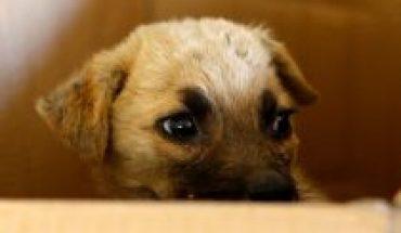 Cerca de 200 mil personas ya firmaron para que los animales sean incluidos en la Nueva Constitución