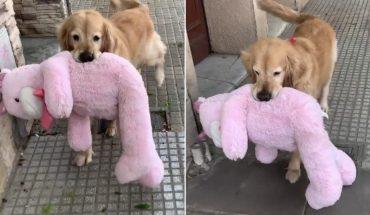 Conocé a Olivia, la perra que pasea con sus peluches y que conquista Twitter