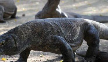 Dragón de Komodo abre sospechas de un Parque Jurásico