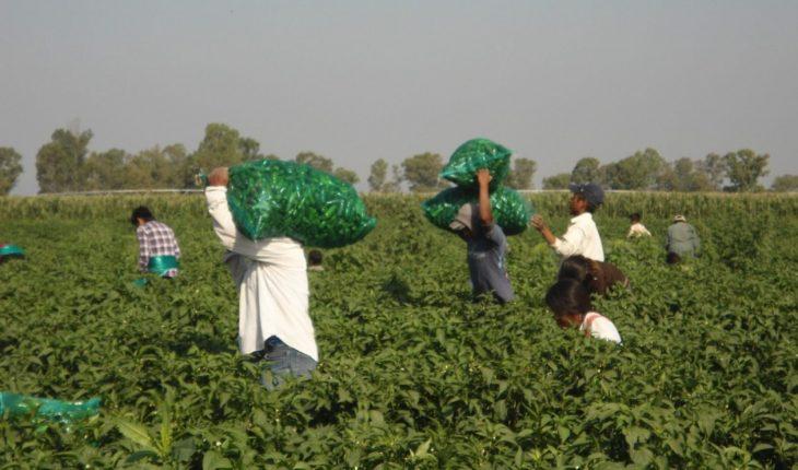 Jornaleros agrícolas piden salario mínimo de 300 pesos