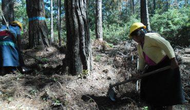 La comunidad indígena que cuida el bosque y construye su futuro