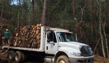 Madera importada domina el mercado de México pionero en manejo forestal