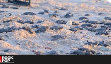Nacen miles de tortugas en peligro de extinción debido al confinamiento — Rock&Pop