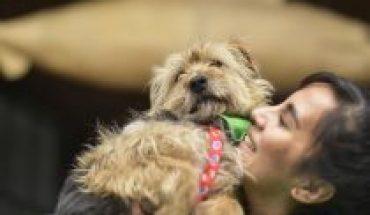 Salud para mascotas: altos costos en atención de especialidades y exámenes médicos ponen en riesgo el cumplimento de Ley de Tenencia Responsable