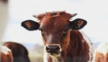 New farm animal research platform launched in Chile