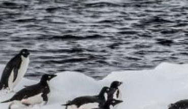 Warn impact of krill capture during warm winters on Antarctic penguin populations