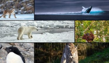 What are the 10 animals most endangered?