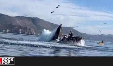 ¡Terrorífica situación! Ballena casi se traga a kayakistas — Rock&Pop