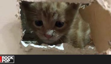 Bomberos rescató a gatito atrapado en una muralla — Rock&Pop