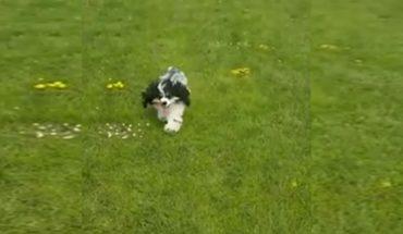Cachorro con discapacidad vuelve a caminar