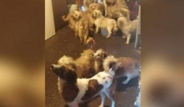 FGE Michoacán rescató 60 perros relacionados a #CrueldadAnimal