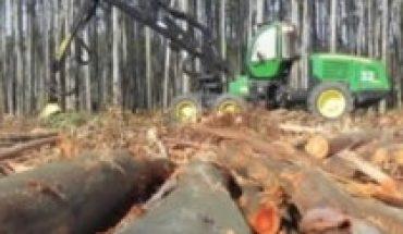 Presupuesto 2021: ¿Continuará financiando monocultivos forestales?