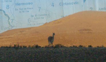 """""""Proyecto Patagonia"""", el estreno para reflexionar sobre el medio ambiente"""