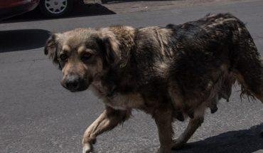 Regalan comida envenenada para perros en Tlaquepaque