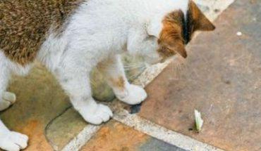 Sepa cómo evitar que un perro o gato se ahogue capturando una polilla