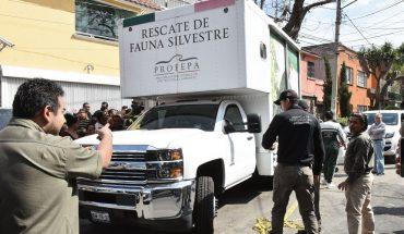 aseguran 15 mil animales en Iztapalapa