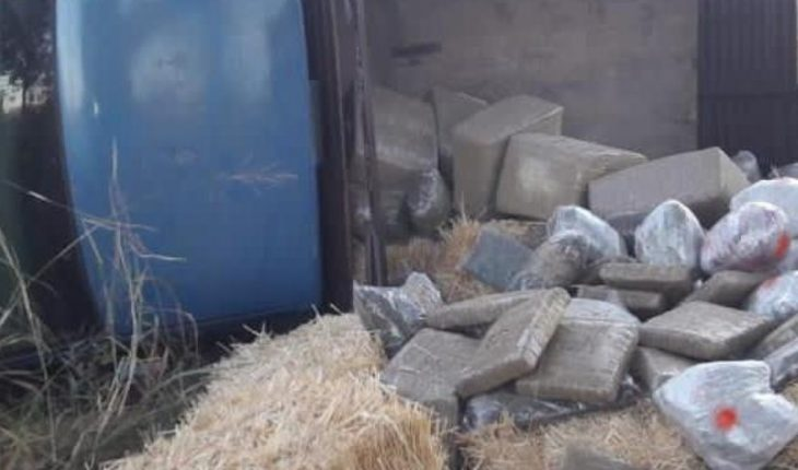Ensures GN 198 oat bales with marijuana in Zacatecas