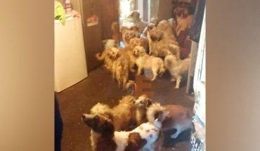 Aseguran 60 ejemplares caninos relacionados en el delito de crueldad animal en Uruapan