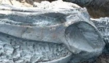 They find in Thailand the almost intact skeleton of a whale at least 3,000 years ago