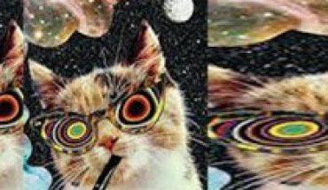 Charla científica sobre Conciencia & Psicodelia en Noche Nerd vía online