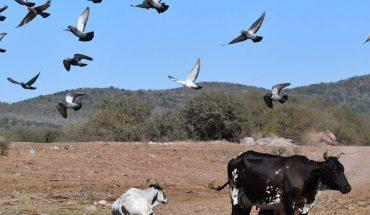 Comunidades no reciben agua de presa Picachos y Miravalles en Mazatlán
