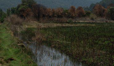 Estas son las 10 historias ambientales más importantes de México