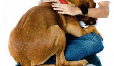 Pirotecnia: qué sienten los animales y los niños y por qué no debemos usarlas más