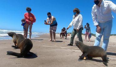 Un lobo marino fue rescatado, rehabilitado y devuelto al mar