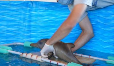Alert tourists: How they should act in the face of finding a baby dolphin on the coast