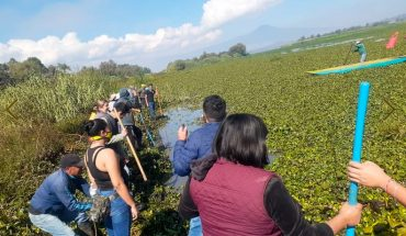 In the face of the oblivion of municipal authorities, citizens clean up Lake Pátzcuaro
